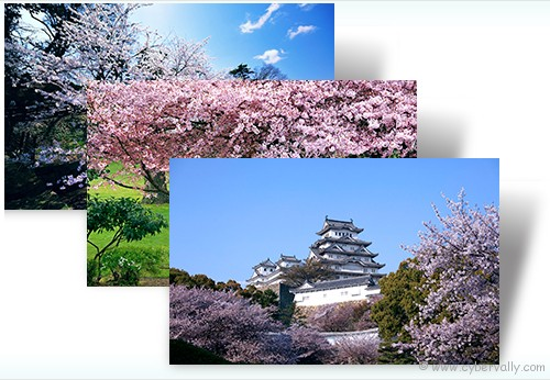 Cherry Blossoms Top 10 HD Quality Nature Themes for Windows 7