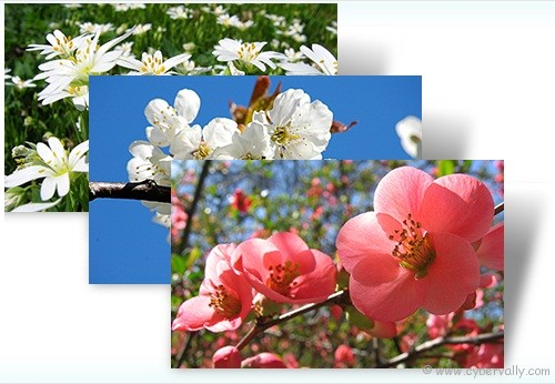 Czech Spring Top 10 HD Quality Nature Themes for Windows 7