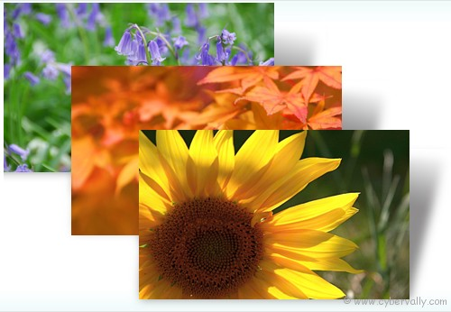 Flowers and Foliage Top 10 HD Quality Nature Themes for Windows 7
